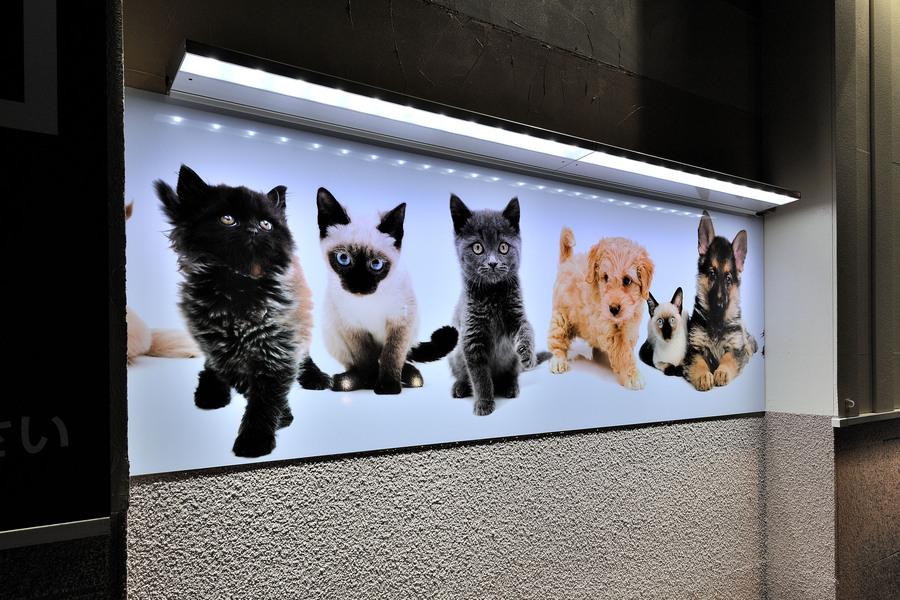 外照式サイン用LED電装ユニット「アドビューL」 お店の看板を明るく照らす、省電力のLED照明ユニット